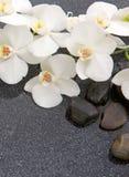 Todavía vida con las piedras del balneario y la orquídea blanca Imagen de archivo libre de regalías
