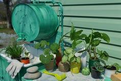 Todavía vida con las plantas del jardín y de la casa en la tabla por el fregadero que se lava del gato viejo Imagenes de archivo