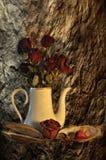 Todavía vida con las rosas secadas Foto de archivo