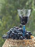 Todavía vida con las uvas Foto de archivo libre de regalías