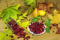 Todavía vida con los arándanos y las peras de las hojas de otoño Fotografía de archivo