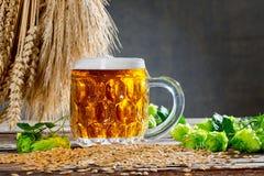 Todavía vida con los conos y la cerveza de salto Foto de archivo libre de regalías