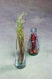 Todavía vida con los escaramujos secados Foto de archivo libre de regalías