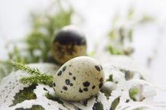Todavía vida con los huevos de codornices - Ramos Domingo Foto de archivo