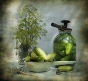 todavía vida con los pepinos y el eneldo Imagen de archivo libre de regalías