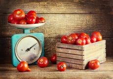 Todavía vida con los tomates frescos Imágenes de archivo libres de regalías