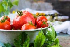 Todavía vida con los tomates maduros Imagen de archivo