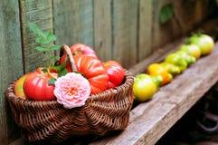 Todavía vida con los tomates y las rosas Fotos de archivo libres de regalías