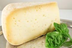 Todavía vida con queso y albahaca Imagen de archivo libre de regalías