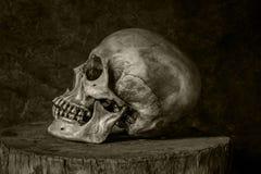 Todavía vida con un cráneo. Imagen de archivo libre de regalías