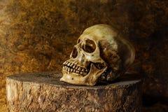 Todavía vida con un cráneo Fotos de archivo
