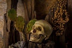 Todavía vida con un cráneo humano con las plantas de desierto Foto de archivo libre de regalías