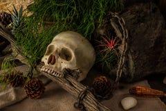 Todavía vida con un cráneo humano con las plantas de desierto Imagen de archivo