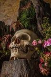 Todavía vida con un cráneo humano con las plantas de desierto, cactus, rosas Imágenes de archivo libres de regalías