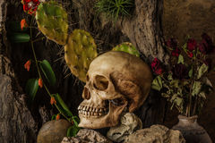 Todavía vida con un cráneo humano con las plantas de desierto, cactus, rosas Imagen de archivo
