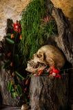 Todavía vida con un cráneo humano con las plantas de desierto, cactus, rosas Fotografía de archivo