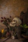 Todavía vida con un cráneo humano con las plantas de desierto, cactus, rosas Imagen de archivo libre de regalías