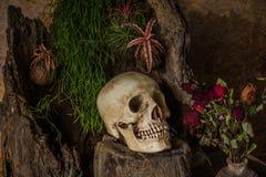 Todavía vida con un cráneo humano con las plantas de desierto, cactus, rosas Foto de archivo