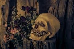 Todavía vida con un cráneo humano con una rosa roja Foto de archivo libre de regalías