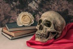 Todavía vida con un cráneo humano con una rosa falsa del blanco Fotografía de archivo