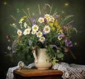 Todavía vida con un ramo de margaritas de Transvaal en un jarro blanco Fotografía de archivo libre de regalías