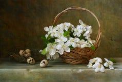 Todavía vida con una cesta de manzana de las flores Foto de archivo libre de regalías