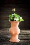 Todavía vida con una flor del florero, loza de barro Imagen de archivo libre de regalías