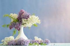 Todavía vida con una lila floreciente Imagenes de archivo