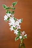 Todavía vida con una rama floreciente Imagenes de archivo