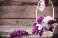 Todavía vida con una rama floreciente de la lila Fotografía de archivo