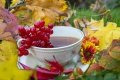 Todavía vida con una taza de té Imágenes de archivo libres de regalías