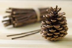 Todavía vida - cono del pino Foto de archivo libre de regalías