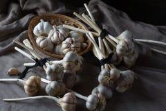 Todavía vida de bulbos del ajo Foto de archivo libre de regalías