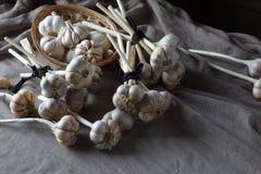 Todavía vida de bulbos del ajo Imagen de archivo