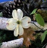 Todavía vida de flores Fotos de archivo libres de regalías