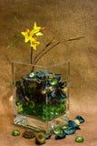 Todavía vida de flores secadas Imagen de archivo