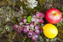 Todavía vida de la fruta en la tierra del musgo Fotografía de archivo