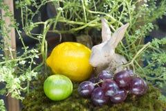 Todavía vida de la fruta y del conejo, plan redondo del yeso de cerámica del pájaro fotografía de archivo libre de regalías