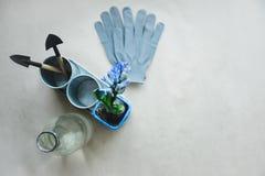 Todavía vida de la planta de la mezcla del jacinto y de herramientas que cultivan un huerto en pote del metal Imagenes de archivo