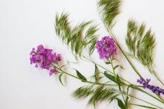 Todavía vida de las flores de la primavera Visión superior Fotos de archivo libres de regalías