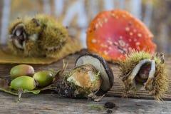 Todavía vida de las frutas del otoño Fotos de archivo libres de regalías