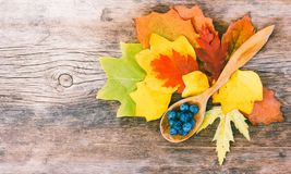 Todavía vida de las hojas de otoño y de las bayas brillantes del endrino en una cuchara de madera en un viejo tablero agrietado n Fotos de archivo libres de regalías