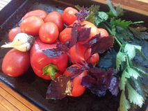 Todavía vida de las verduras del otoño, tomates, pimientas, ajo, albahaca, Celera Foto de archivo libre de regalías