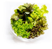 Todavía vida de las verduras frescas Imagen de archivo