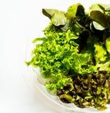 Todavía vida de las verduras frescas Imágenes de archivo libres de regalías