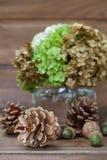 Todavía vida de los conos del pino, de las nueces, de las bellotas y de un florero con verdes Foto de archivo libre de regalías