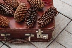 Todavía vida de los conos del pino y de las bayas de la ceniza de montaña en los tableros de madera, decoraciones de la Navidad imagenes de archivo
