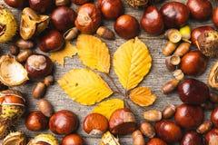 Todavía vida de los ingredientes del otoño foto de archivo