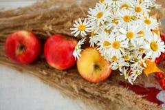 Todavía vida de manzanas maduras rojas en las espiguillas Foto de archivo libre de regalías