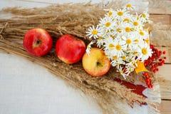 Todavía vida de manzanas maduras rojas en las espiguillas Imagen de archivo libre de regalías